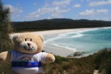 Ashley bear at bay of fires in Tasmania