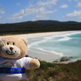 Ashley bear at bay of fires in Tasmania