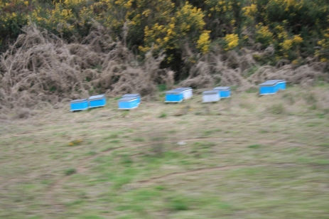 More Bee hives right by the track