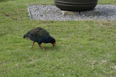bird on low land