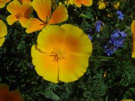 botanic gardens yellow flowers